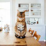 6 cosas raras que hacen los gatos