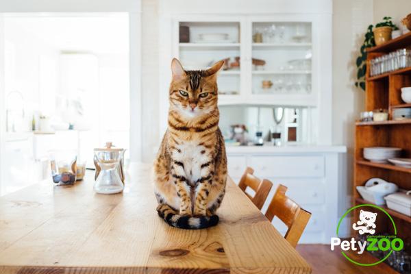 Cosas Raras que Hacen los Gatos