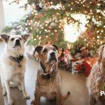 5 ideas para regalar y sorprender a tus mascotas esta Navidad