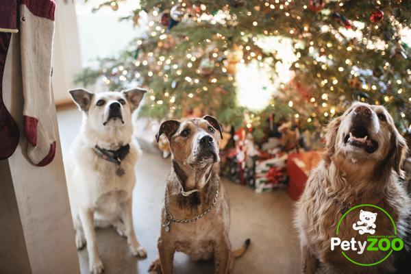 Ideas para regalar a un perro en navidad