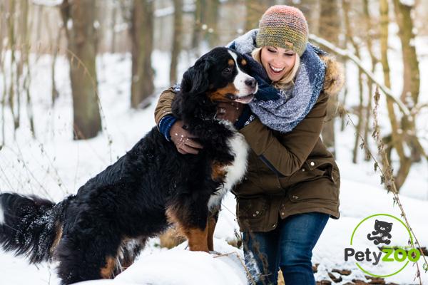 Ir a la nieve con perros