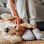 Consejos para cuidar a los perros y gatos en la cuarentena del COVID-19