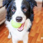 5 ideas para entretener a tu perro o gato en casa durante la cuarentena