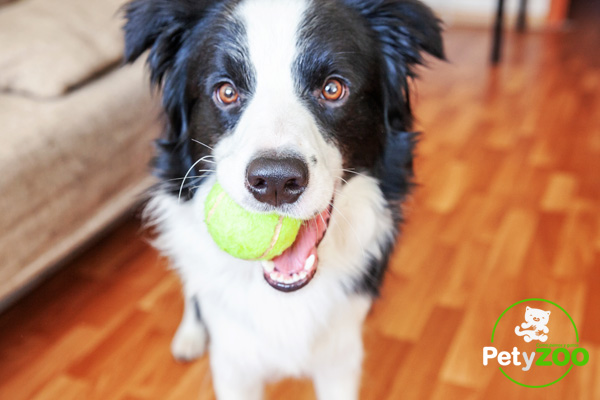 Juegos para mascotas en casa durante la Cuarentena